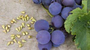 szőlőmag kivonat